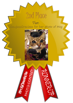 Congrats to GawjussGracieex for 2nd place in the pet photo contest for her entry of Mog!